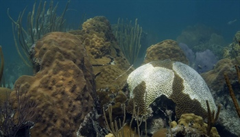 Research: coral reefs will be unable to keep pace with sea-level rise