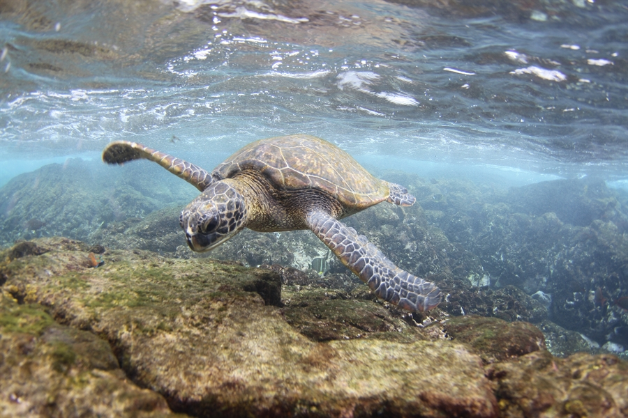 The DNA found in sea turtle poop could be scientists' newest monitoring tool