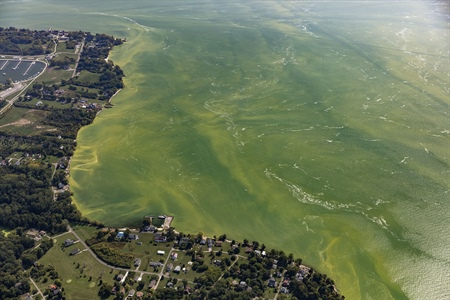 NOAA improves harmful algal bloom forecasts with new 3-D model