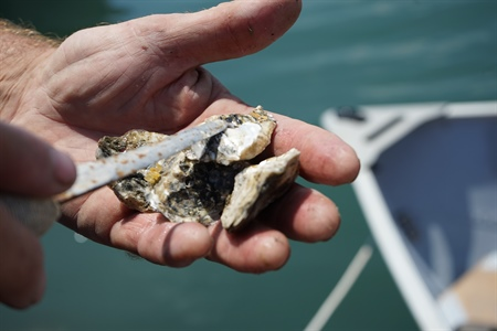 Scientists and oyster growers are working together to understand ocean acidification