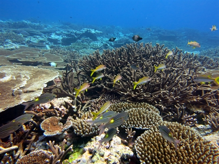 Fagatele Bay coral reef