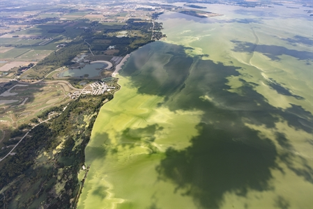 Harmful algal bloom, as seen from above.