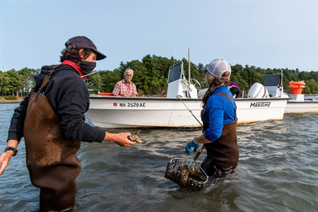 Sea Grant support of oyster restoration