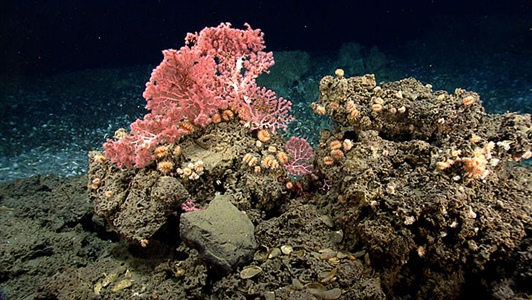 Ocean explorers make discoveries in deep sea canyons off U.S. Northeast