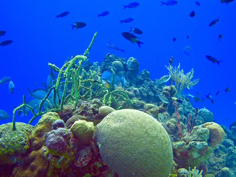 United States and Cuba open doors to marine science cooperation