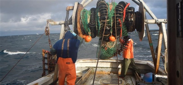 Warming waters a major factor in Gulf of Maine cod collapse
