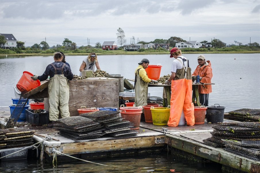 NOAA Sea Grant awards $2.6 million for new aquaculture projects