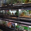 Row of aquarium tanks
