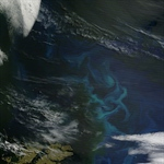 Clearing up a cloudy view of phytoplankton's role in the climate system