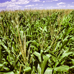 NOAA, partners find increase in airborne ethanol