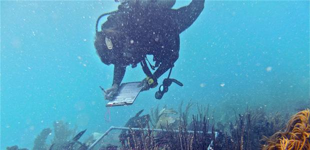 NOAA and partners release first federal ocean acidification strategic research plan