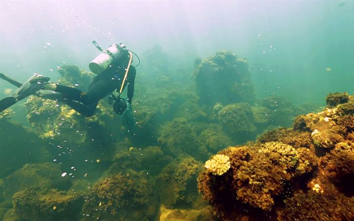 Microscopic organisms increase coral erosion in acidic waters