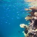 Study shows ocean acidification is two-front assault on coral reefs