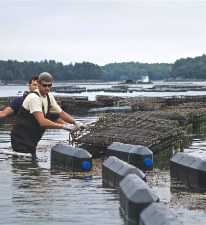New tool helps oyster growers prepare for changing ocean chemistry