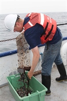 NOAA Researcher Collects Mussels