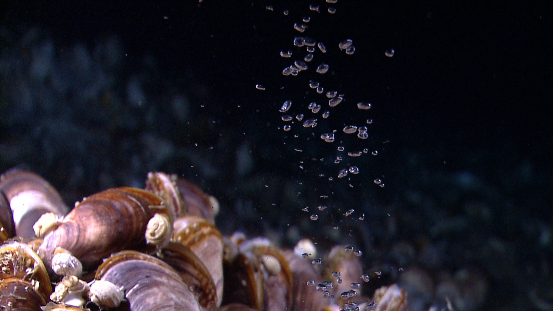 Public invited to virtually join noaa exploration of the for Ocean floor features definition